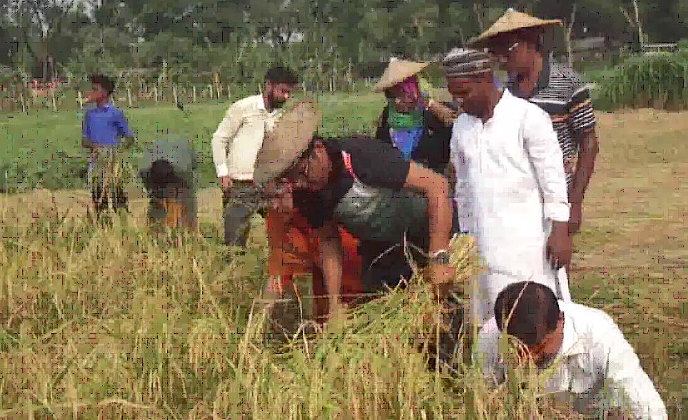 ধান কাটলেন চুয়াডাঙ্গা জেলা প্রশাসক